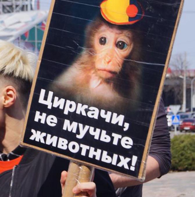 В Днепре зоозащитники вышли на акцию за цирки без животных