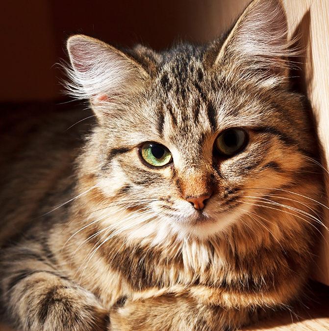 Ученые Минсельхоза США прекратят опыты на кошках