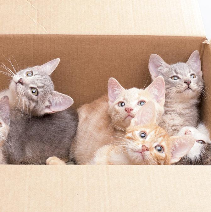 В Великобритании запретят продажу котят и щенков в зоомагазинах