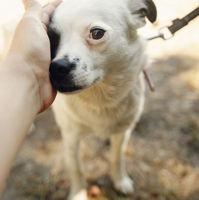 В Одессе пройдет фестиваль для животных из приютов