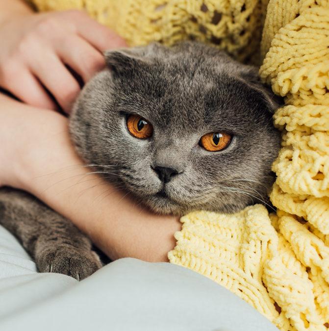 Коти з притулків стають персонажами відеогри. Пояснюємо навіщо
