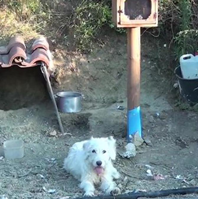 Греческий Хатико. Как собака уже полтора года ждет хозяина после аварии