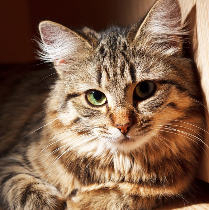 В историческом музее Днепра – новый охранник. Это кот