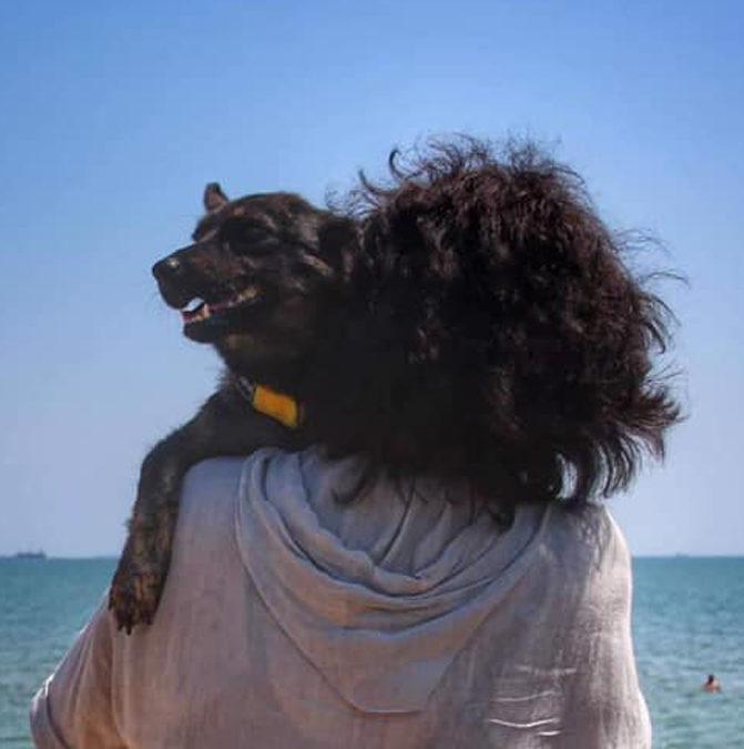 З російського полону звільнили собаку Джесі. Її захопили разом із суднами у Керченській протоці