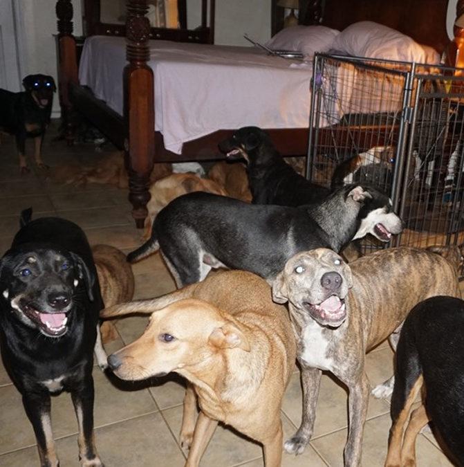 На Багамах женщина спасла около ста собак от урагана «Дориан»