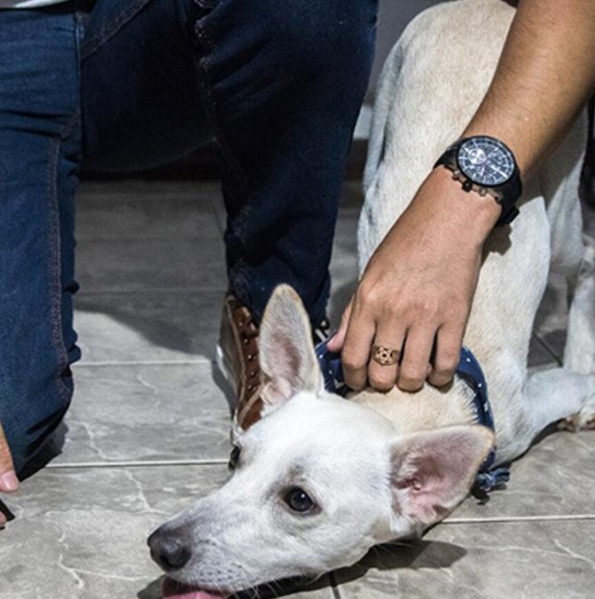 Собака з інвалідністю, яку двічі за день залишили на вулиці, знайшов новий дім