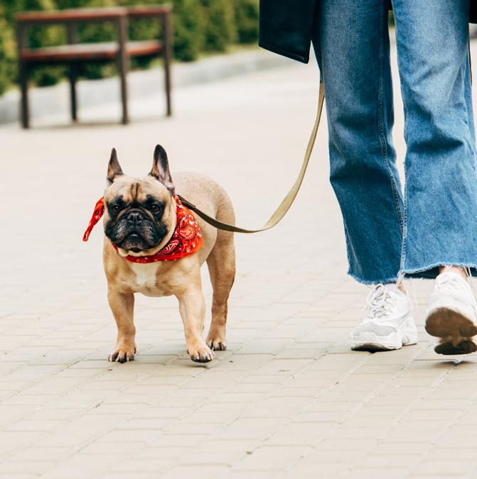 В Херсоне собака спасла женщину от грабителя