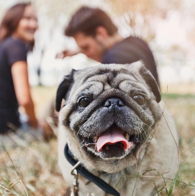 Во Львове можно бесплатно чипировать собаку. График