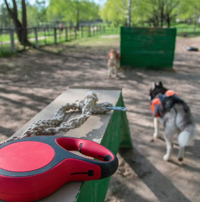 У Львові будують новий тренувально-вигульний майданчик для собак