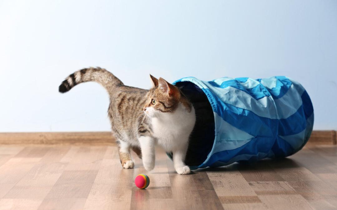 Удаленная работа и коты. Как домашнее животное влияет на нашу жизнь на карантине